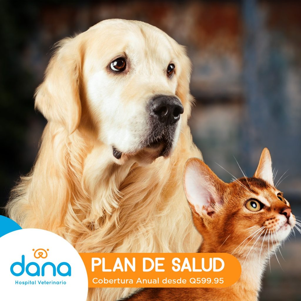DANA Hospital Veterinario Guatemala