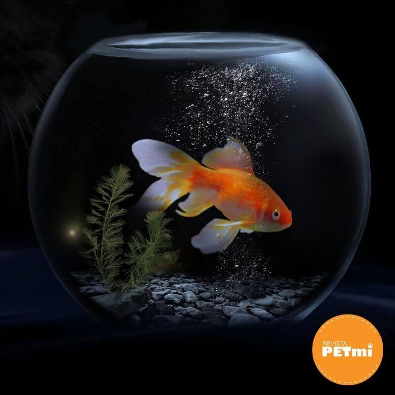 diferencia entre acuario y pecera