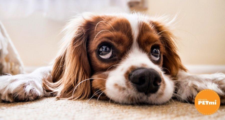 cigarrillo es dañino para las mascotas