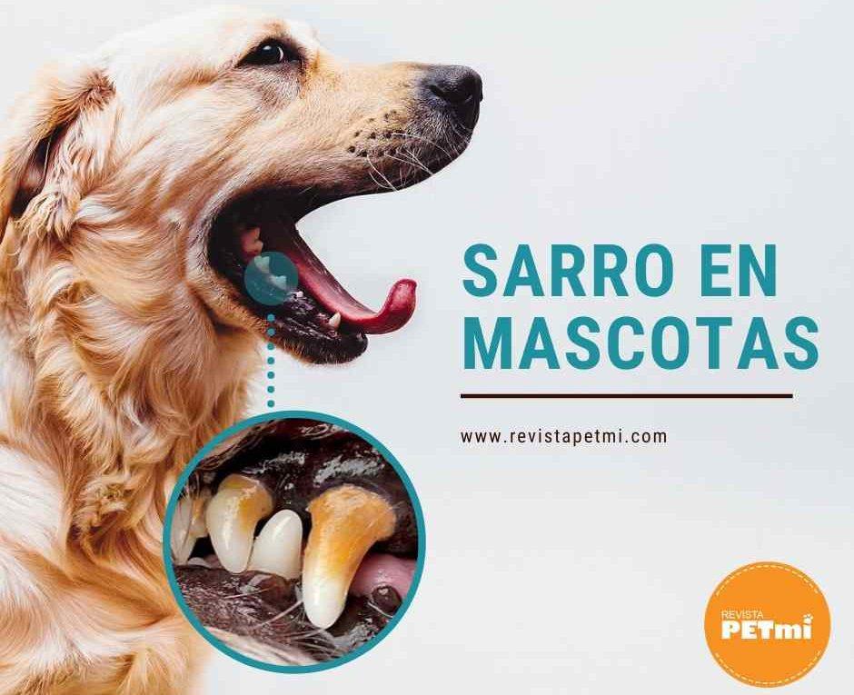 Sarro en mascotas-compressed-compressed