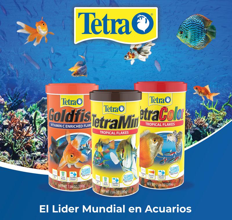 un pez sano Tetra