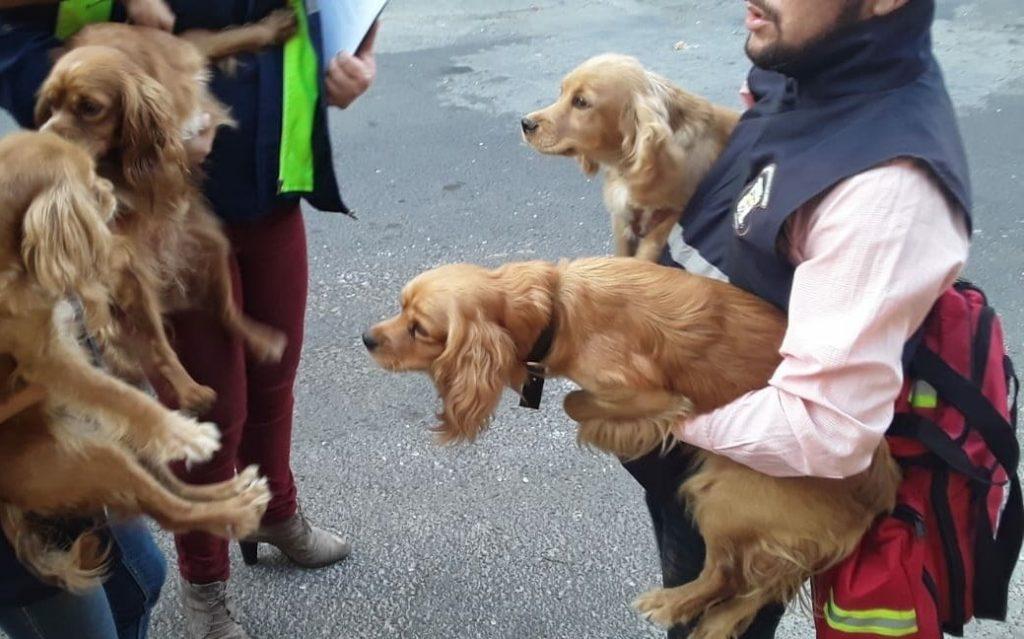 Rescatan a cinco perritos que eran maltratados en Mixco