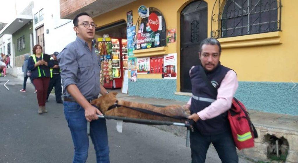 Rescatan a cinco perritos que eran maltratados