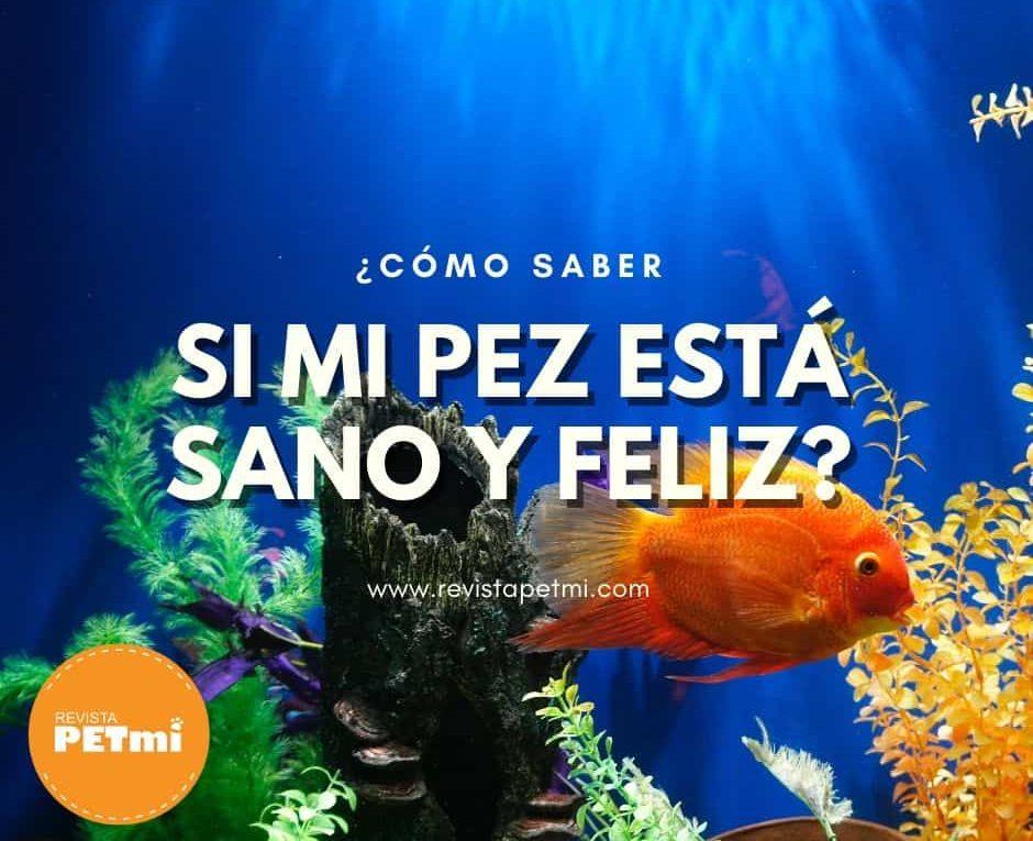 para mantener un pez sano (2)-min