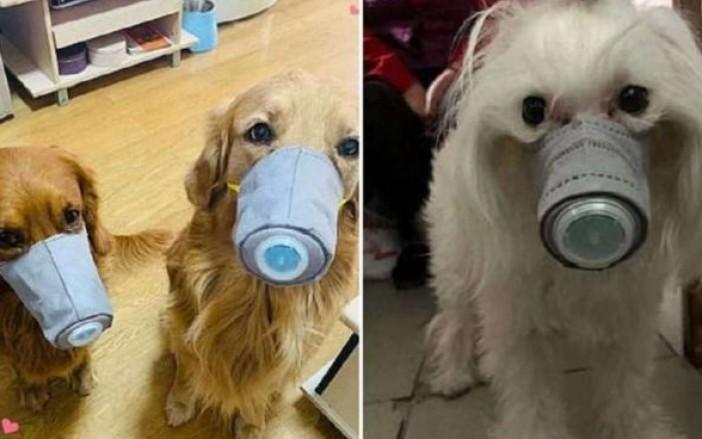 Coronavirus ¡Triste noticia! miles de mascotas son abandonadas en China