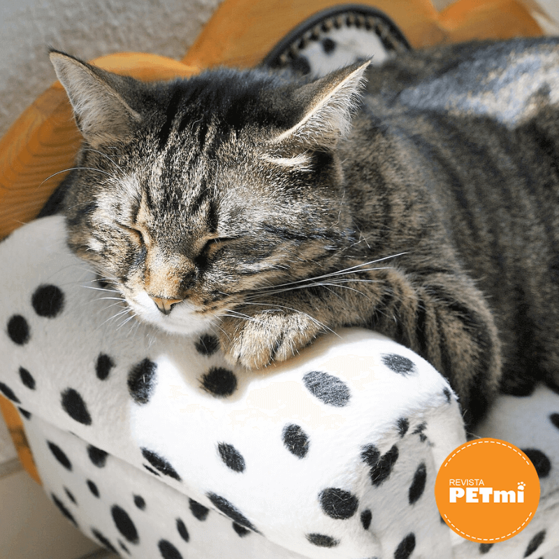 perros y gatos pueden soñar (2) (1) (1)