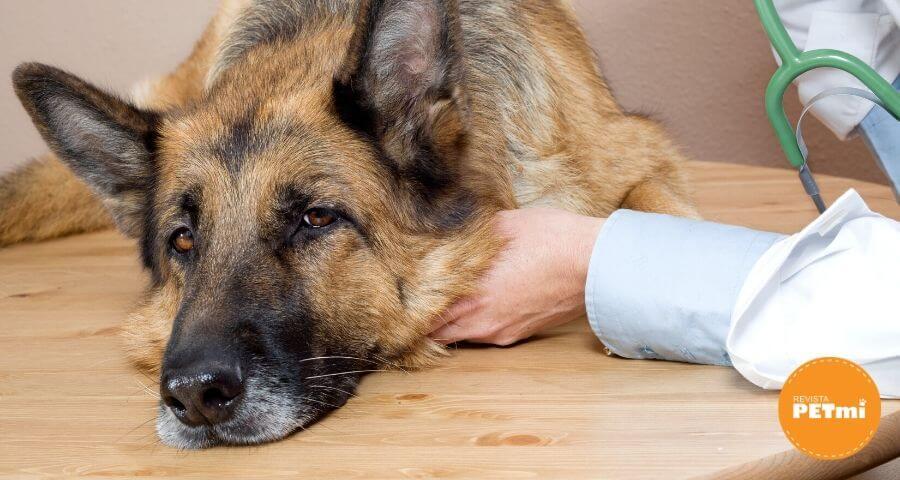 ¿Cómo saber si mi perro sufre de estrés_ (3) (1)