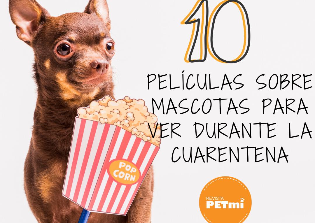 10 Películas sobre mascotas para ver durante la cuarentena en casa