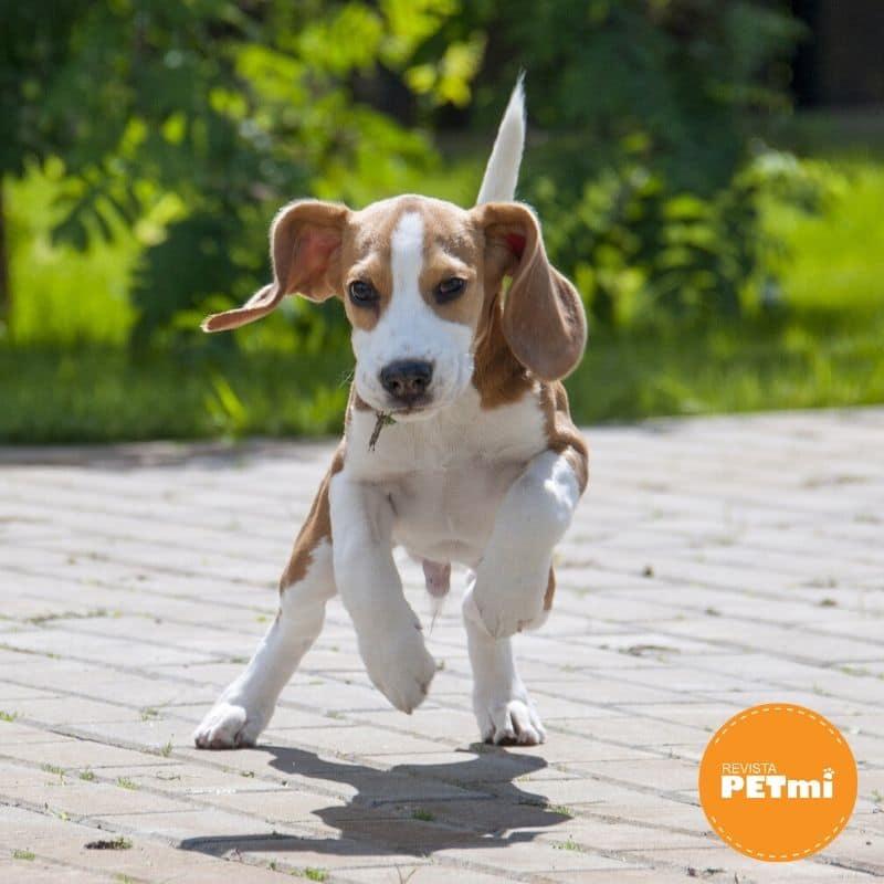 El Beagle (1)-min (1)