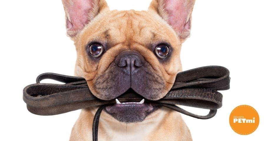 a tu perro sin correa