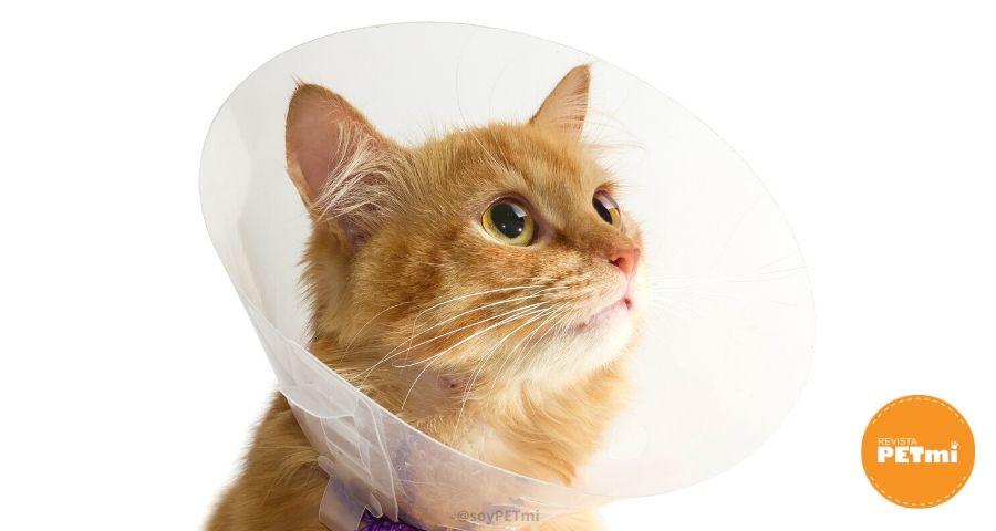 _castración en perros y gatos-min (1)