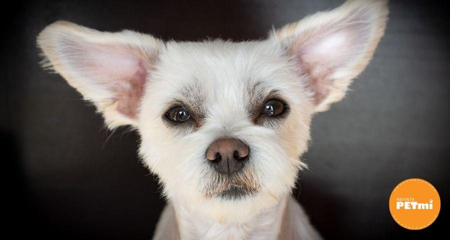 perros mestizos (5)-min