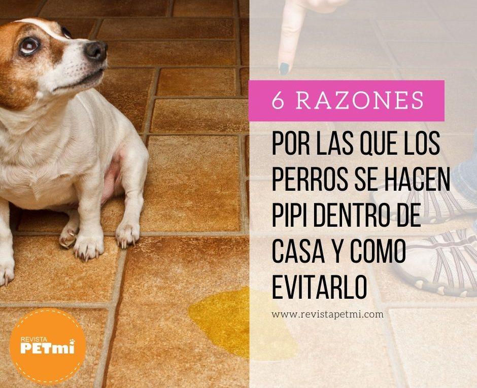 6 razones por las que los perros se hacen pipi dentro de casa y como evitarlo
