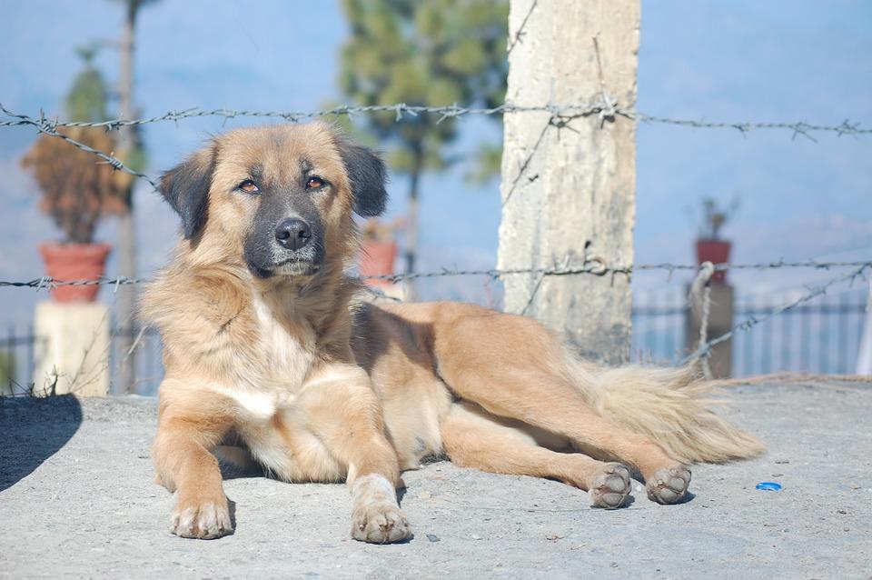 adopta una mascota en la pandemia y recibe cervezas gratis durante 3 meses