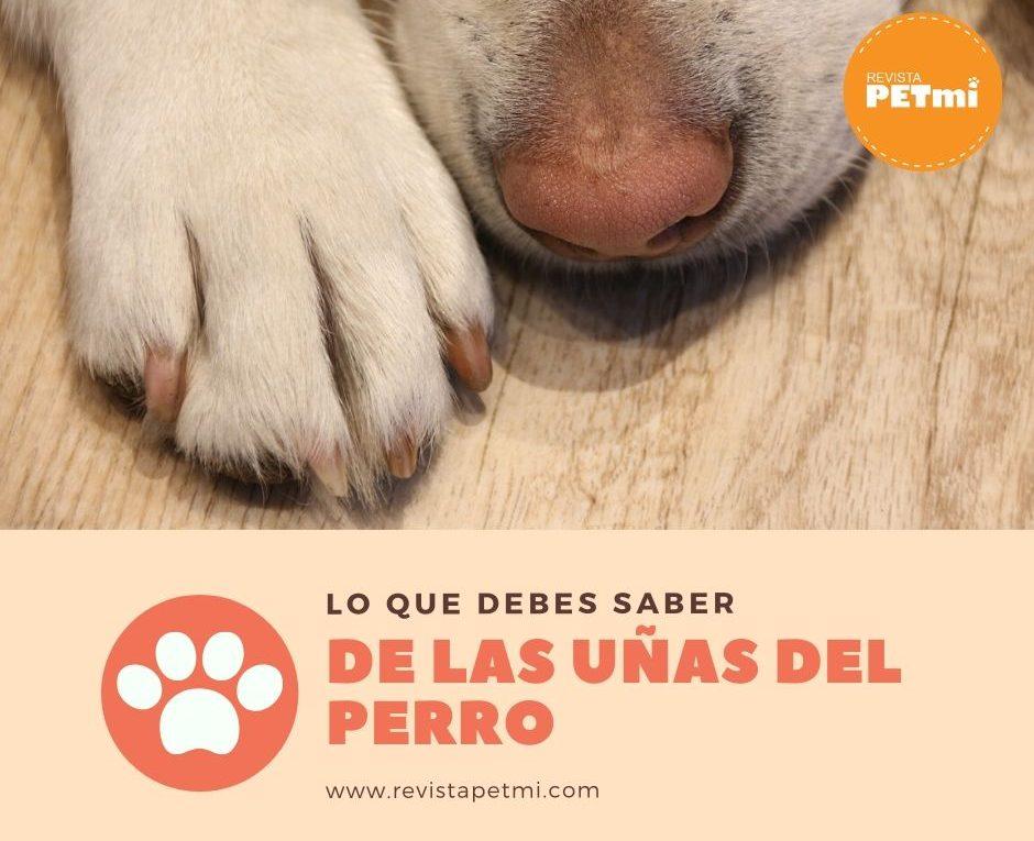 Copia de las uñas de nuestro perro en casa_