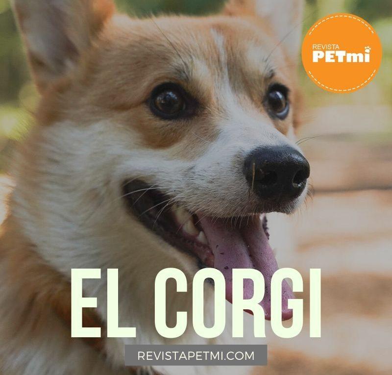 El Corgi