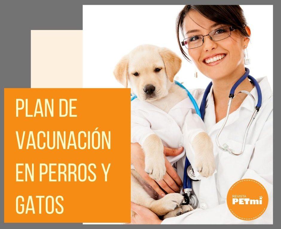 Plan de vacunación en perros y gatos
