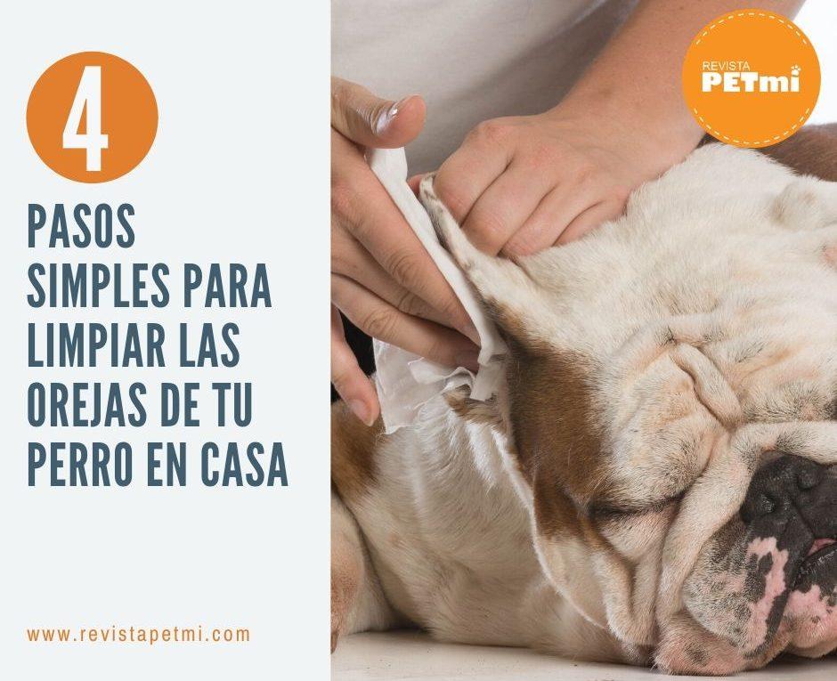 pasos simples para limpiar las orejas de tu perro en casa
