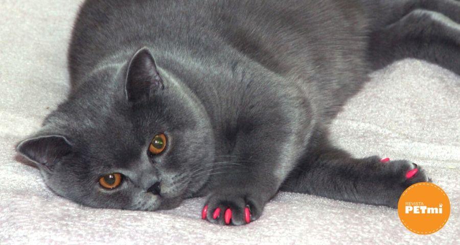 Las uñas de los gatos
