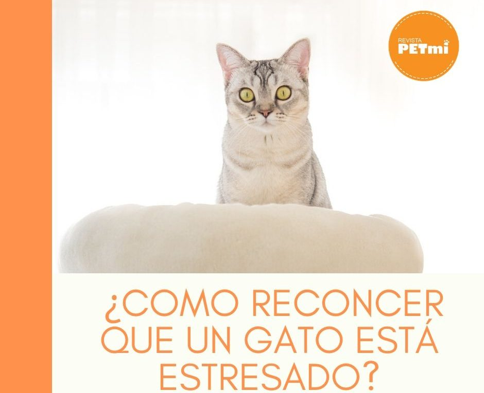 _¿Como reconcer que un gato está estresado_