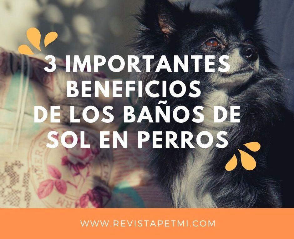 3 importantes Beneficios de los baños de sol en mascotas (1)