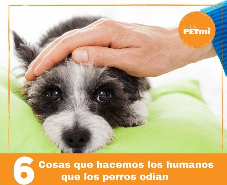 6 cosa que odian los perros,que le hables mucho (2)