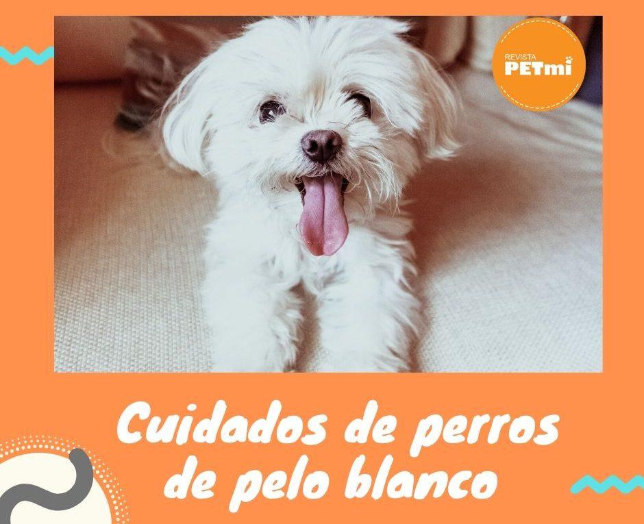 Cuidados especiales de perros de pelo blanco (2)