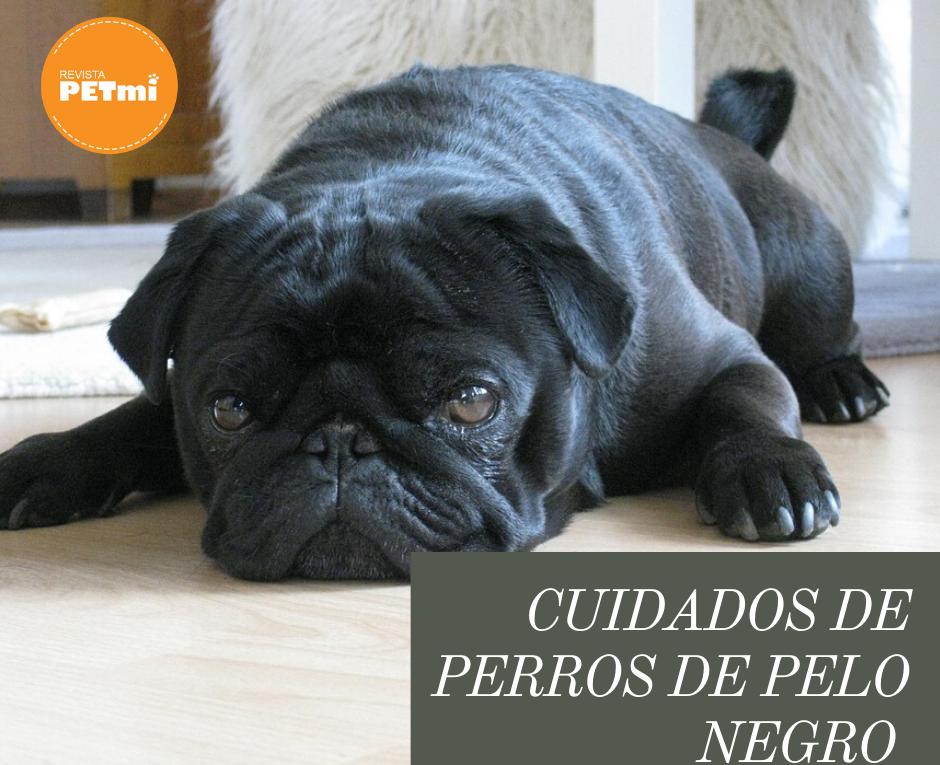 Cuidados de perros de pelo negro