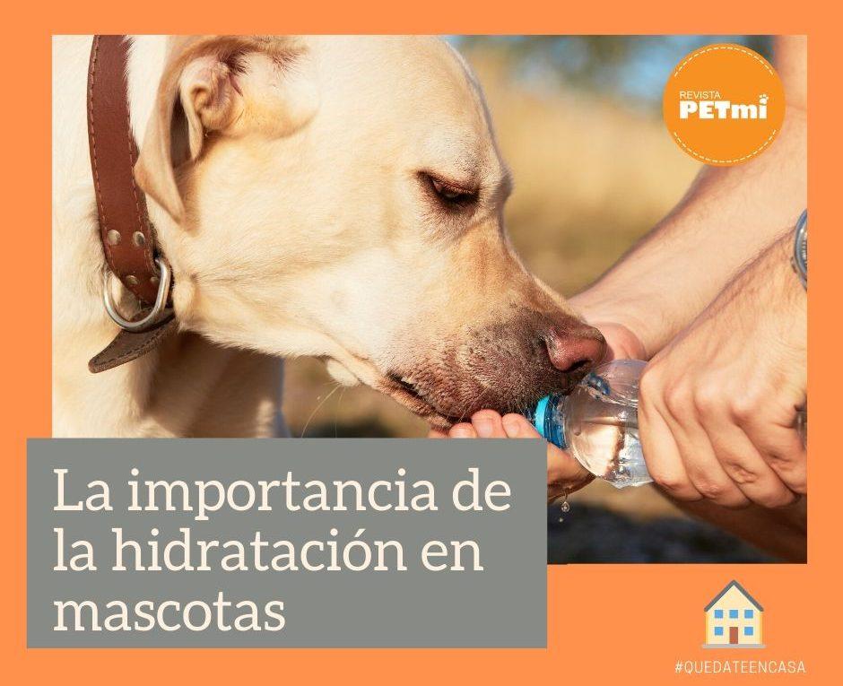 La hidratación de mascotas