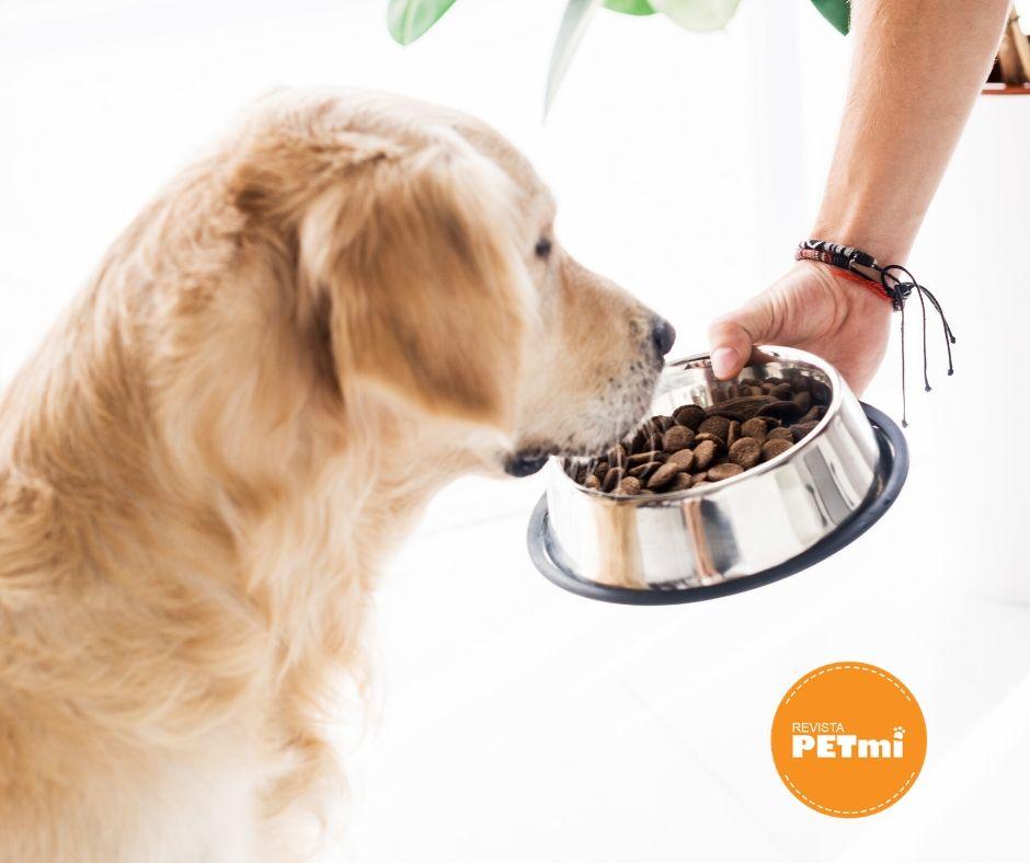 responsabilidad de tener una mascota - alimentacion