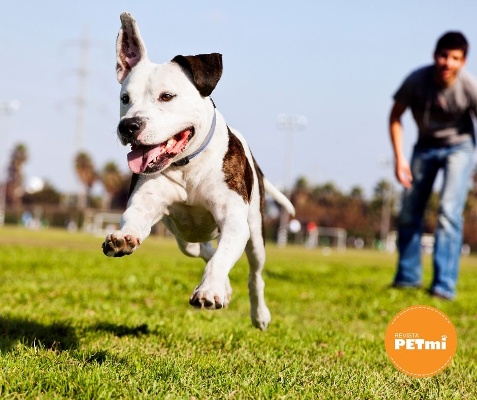 La responsabilidad de tener una mascota, cepillado (1)