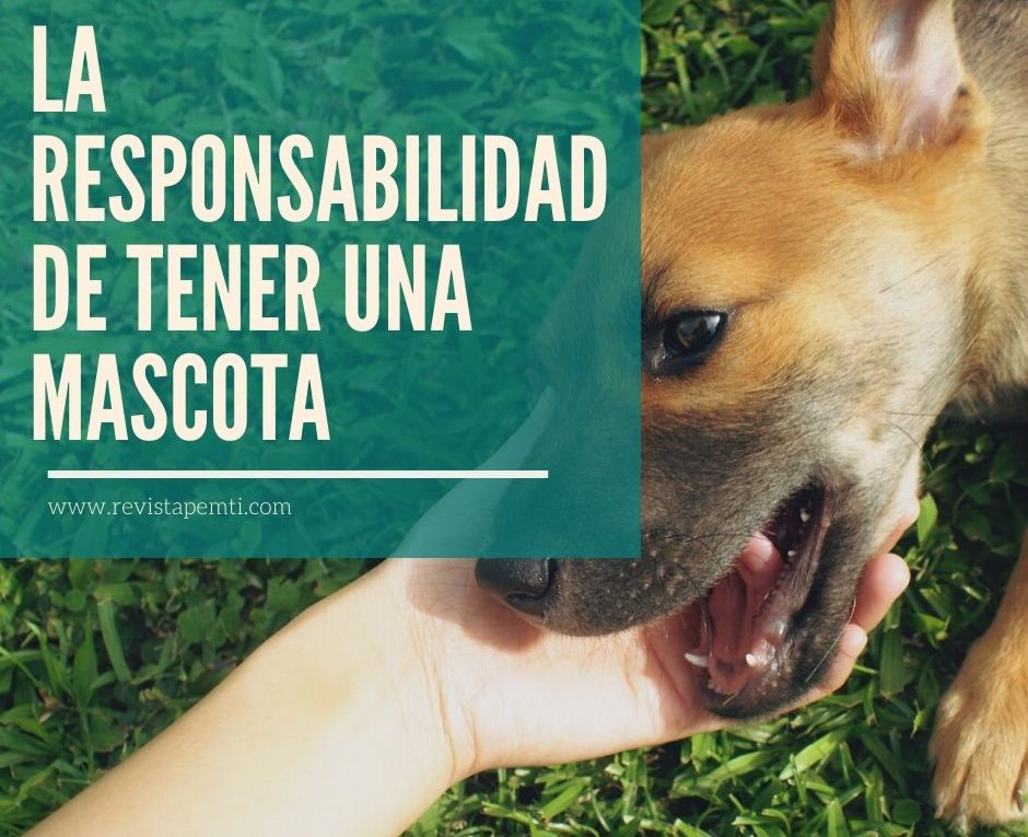 La responsabilidad de tener una mascota, cepillado (2)