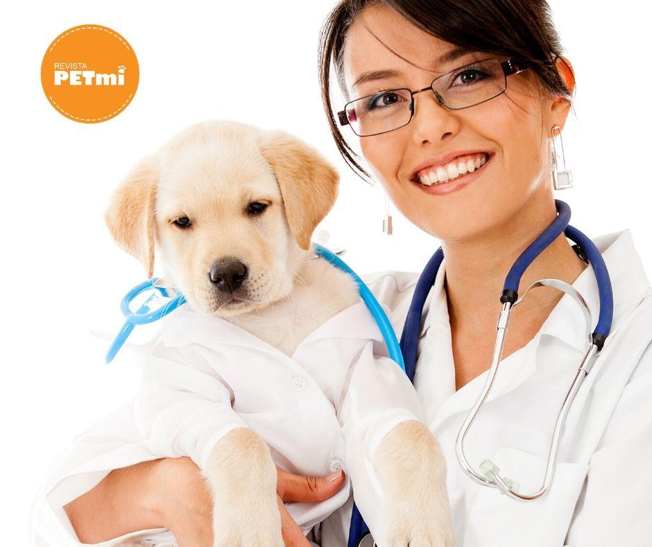 responsabilidad de tener una mascota - salud