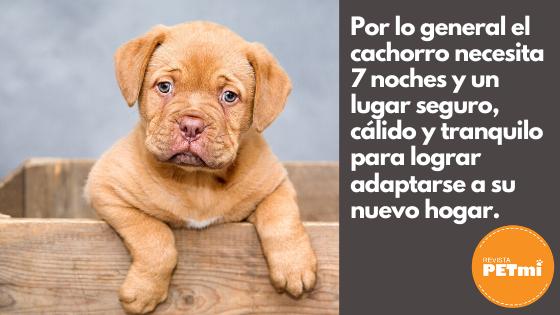 Por lo general el cachorro necesita 7 noches y un lugar seguro, cálido y tranquilo para lograr adaptarse a su nuevo hogar.