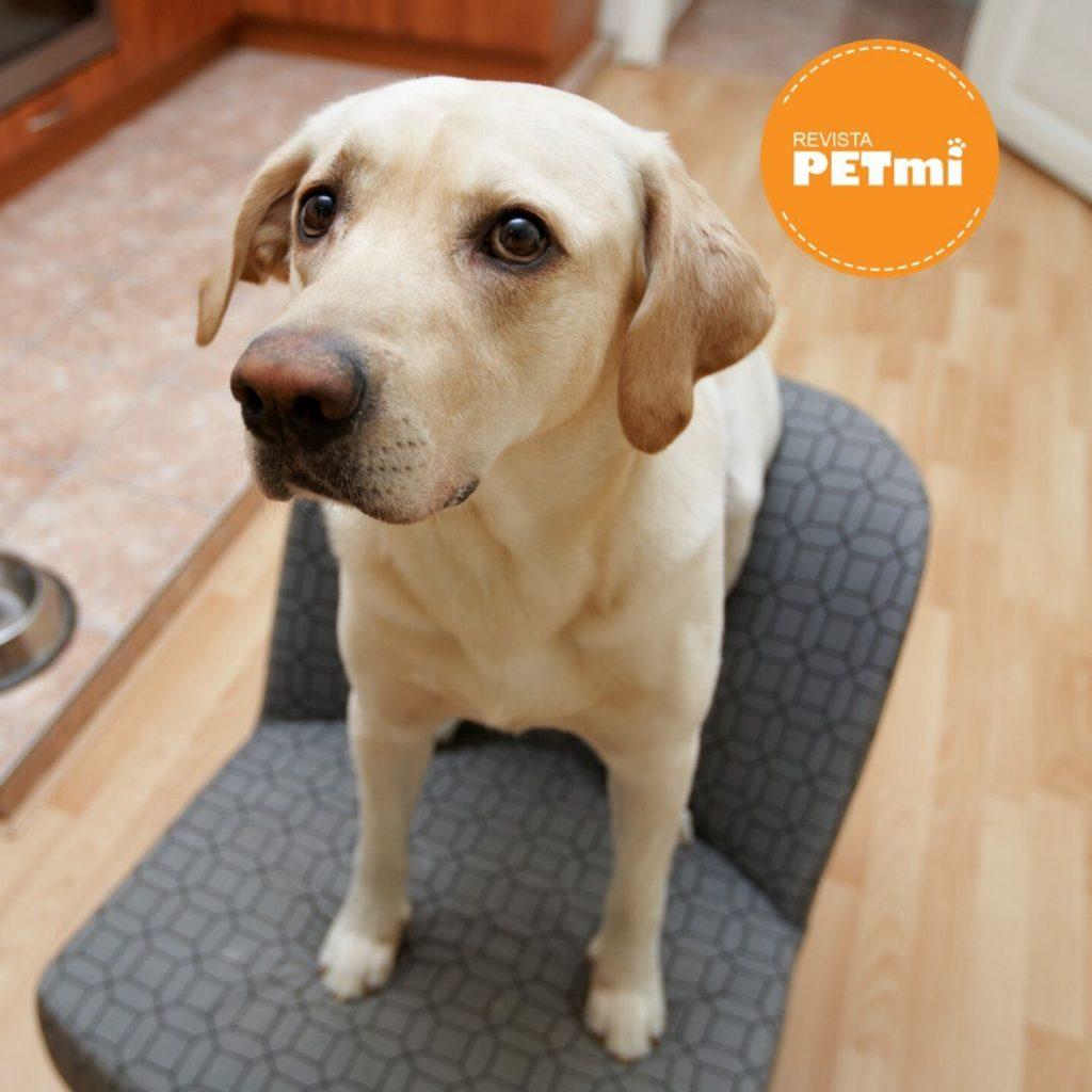Un perro educado, un hogar feliz...  Abajo o Down