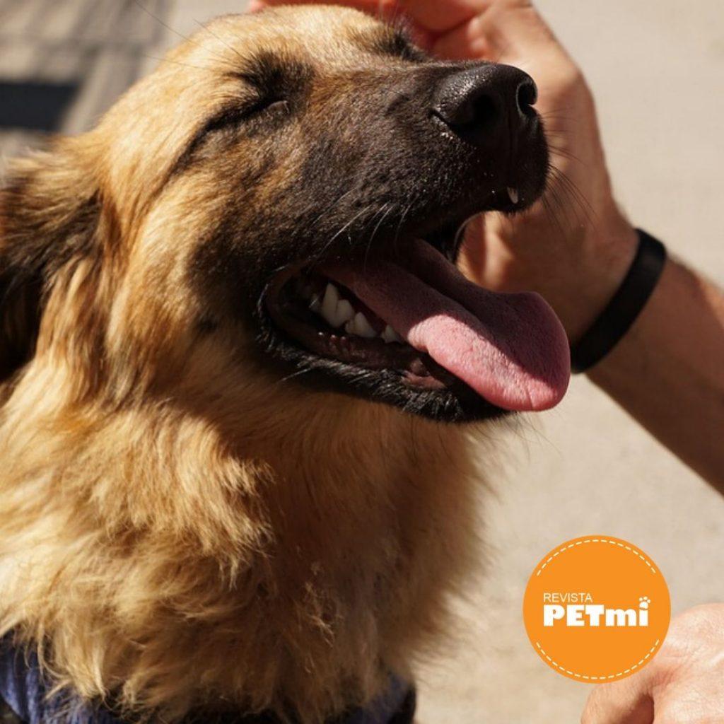 Un perro educado, un hogar feliz... Quieto o Stay