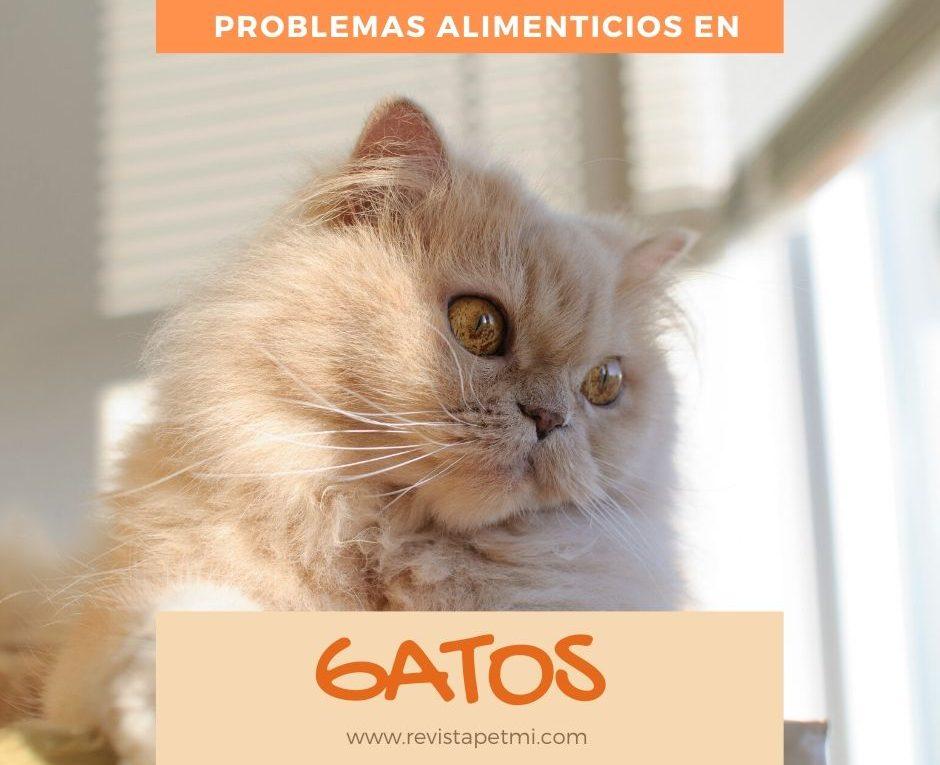 problemas alimenticios en gatos
