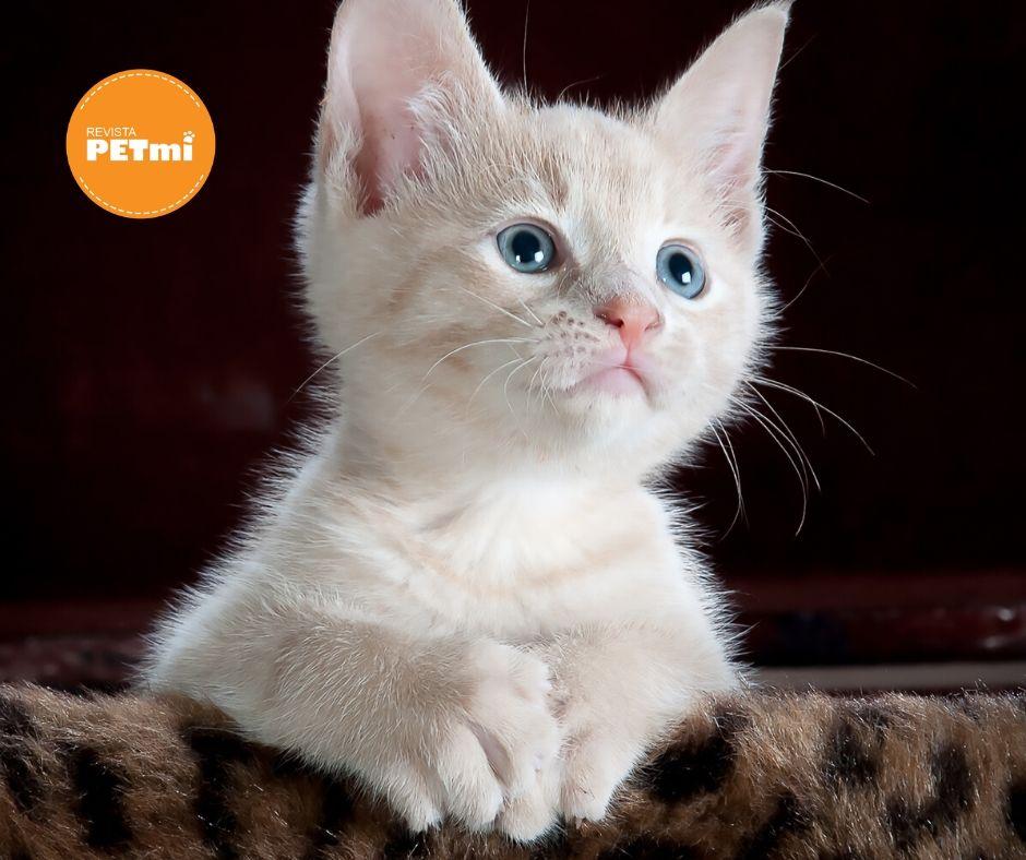¿Como identificar si mi gatito es macho o hembra?