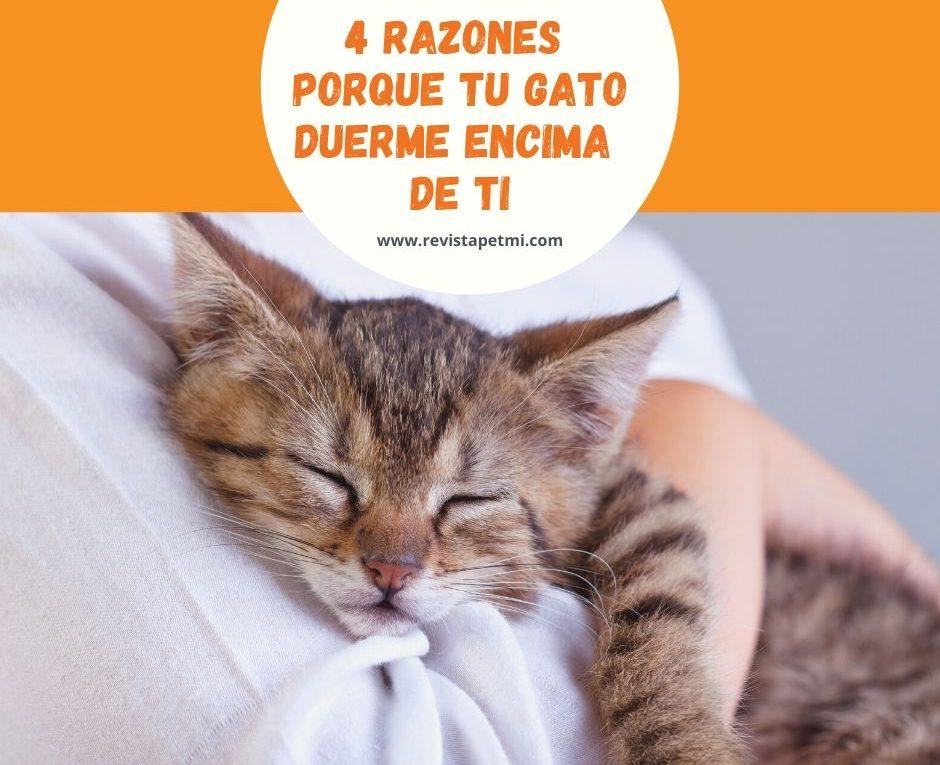 4 razones porque tu gato duerme encima de ti o algun rincon de la casa (1)