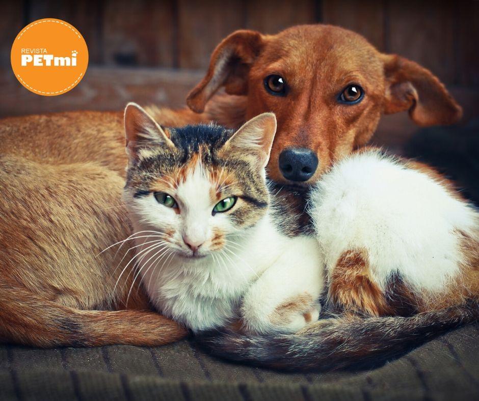 Perros y Gatos con Diábetes