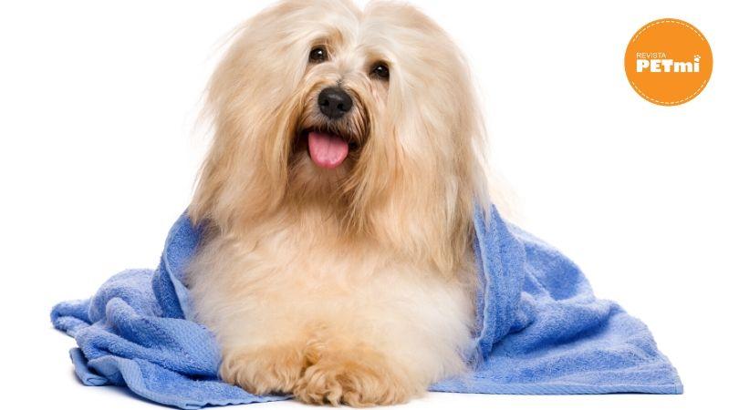 5 consejos para bañar a nuestra mascota en época de lluvia