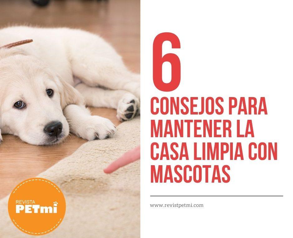 6 consejos para mantener la casa limpia con mascotas (2)