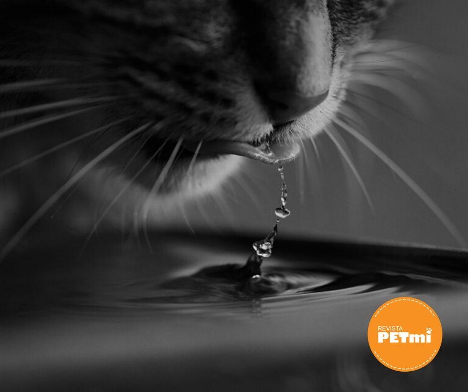 Giardiasis en perros y gatos, La mayoría de los contagios de giardia en mascotas se producen por la ingesta de agua contaminada (agua de lluvia empozada) donde pueden encontrarse quistes del protozoo