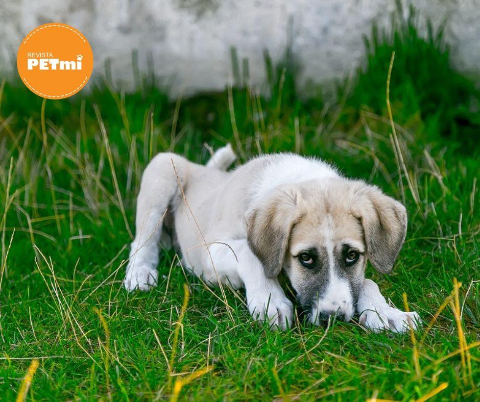 La coccidiosis en perros es una enfermedad protozoaria que hace referencia a infestaciones gastrointestinales por especies de coccidios de los géneros Eimeria e Isospora.
