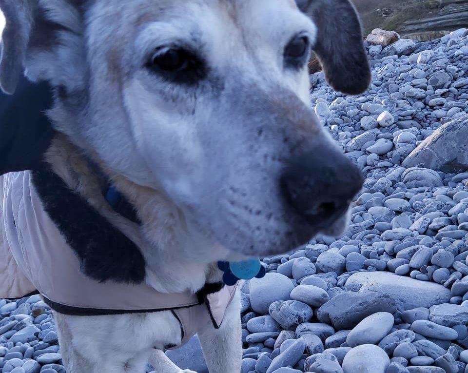 Canche un perro callejero en Francia