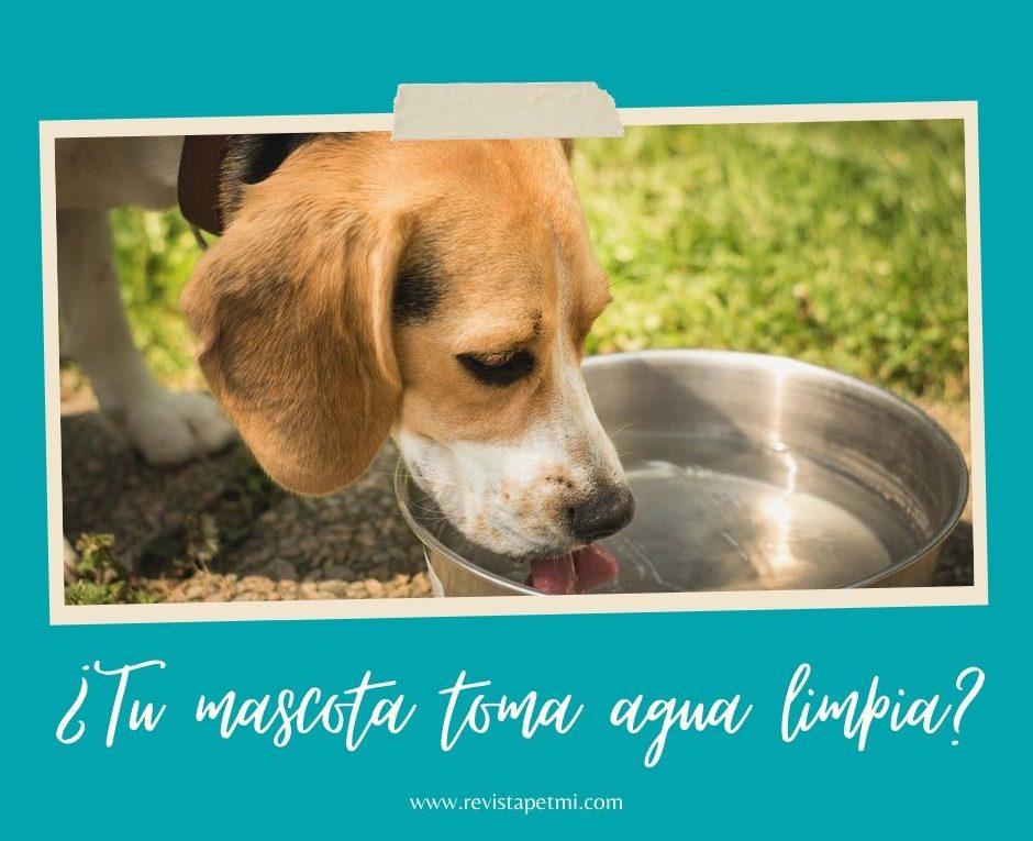 agua limpia para mascotas (1)