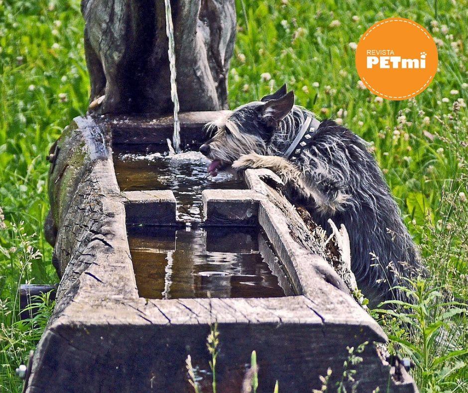 Si el agua del chorro se considera potable, se puede dar a las mascotas sin ningún problema, pero recuerda que algunas veces el agua del chorro puede considerarse PESADA