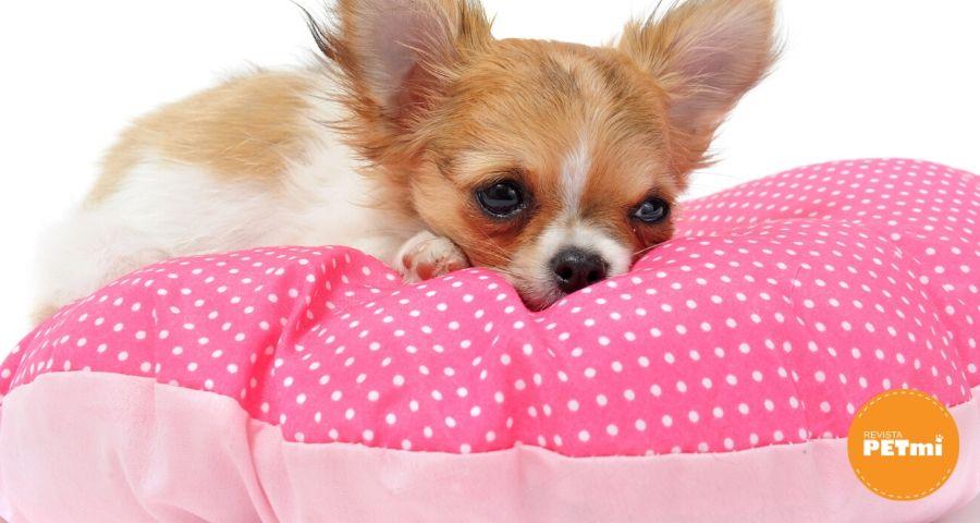 casa limpia con mascotas (1)