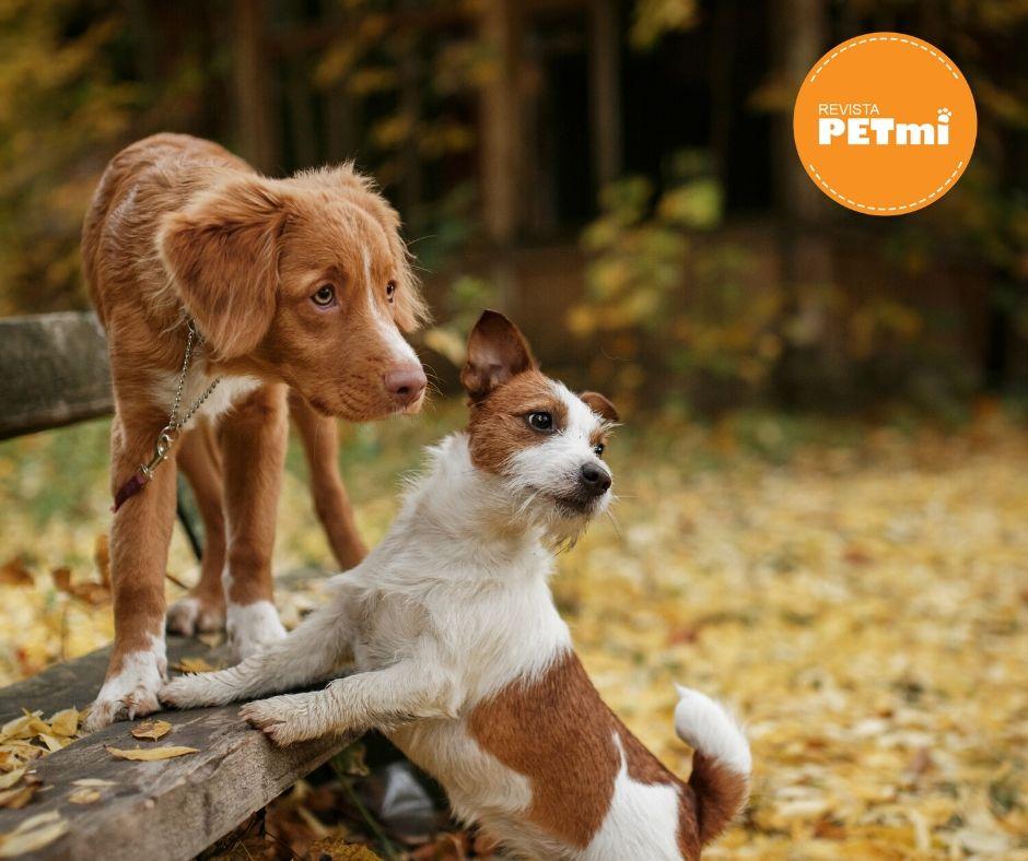 Es esencial cuidar la higiene de los lugares donde nuestras mascotas permanezcan sin dejar excrementos, vómitos y restos de comida, además si sabemos que en nuestro hogar por la presencia de plantas