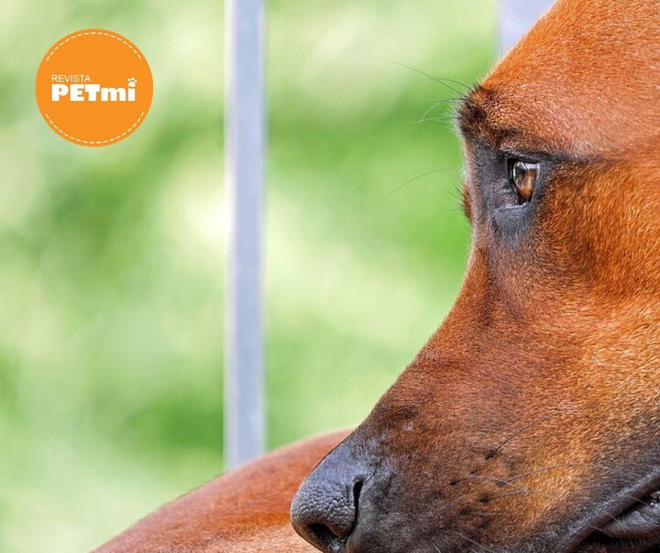 Al ingerir el ronron nuestro perro, se libera a nivel de esofago o bien estómago el endoparásito Spircerca lupi.